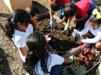 Collective school garden network